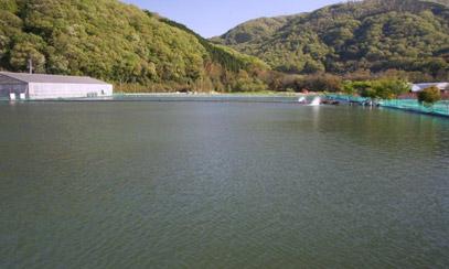 桃太郎渔场全景