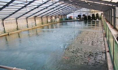 桃太郎室内养鱼池