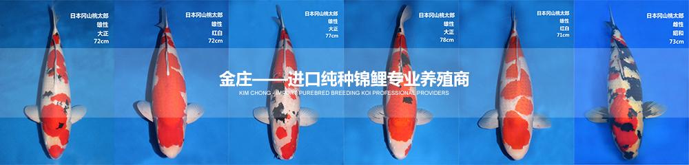 金庄——进口纯种亚博体育app网址专业养殖商