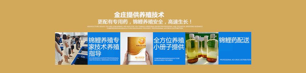金庄提供专业养殖技术