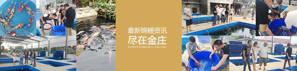 最新亚博体育app网址资讯 尽在金庄